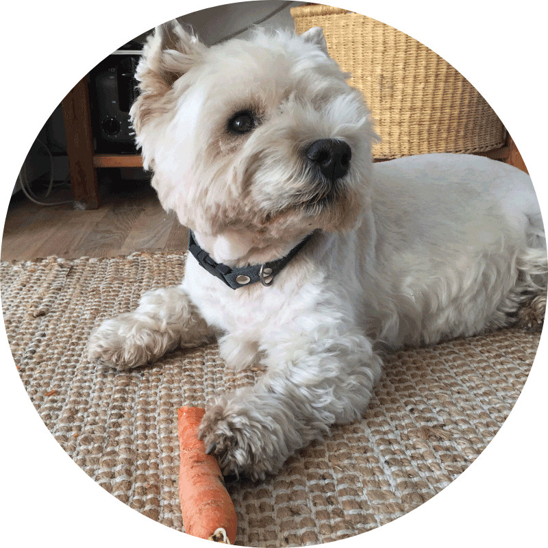 A photo of Lulu eating a carrot
